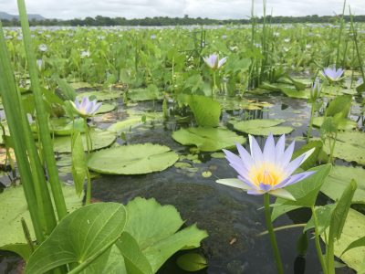 Image for Wetland Assessment services provided by Confluent Environmental